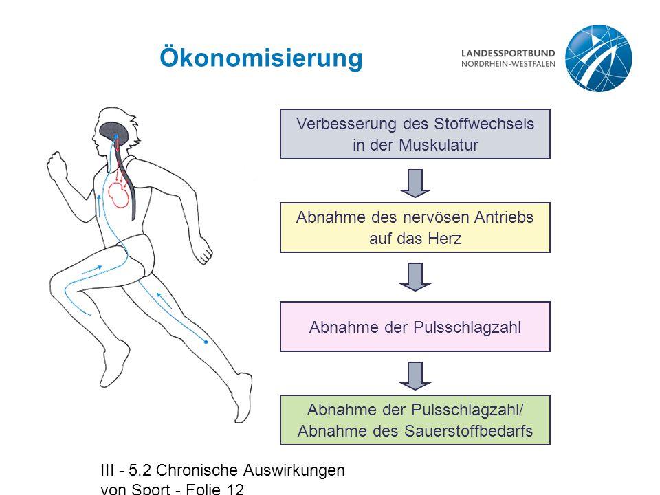 III - 5.2 Chronische Auswirkungen von Sport - Folie 12 Ökonomisierung Verbesserung des Stoffwechsels in der Muskulatur Abnahme der Pulsschlagzahl/ Abn