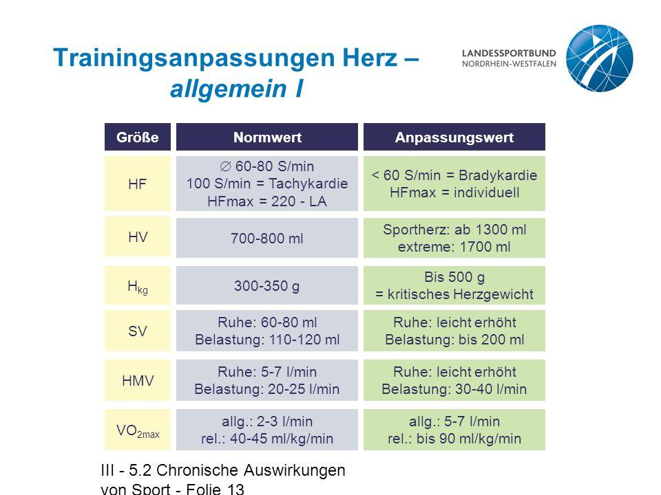 III - 5.2 Chronische Auswirkungen von Sport - Folie 13 Trainingsanpassungen Herz – allgemein I allg.: 5-7 l/min rel.: bis 90 ml/kg/min allg.: 2-3 l/mi
