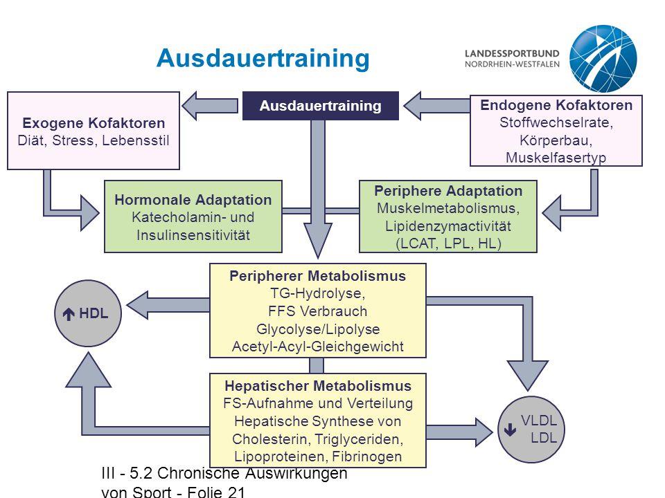 III - 5.2 Chronische Auswirkungen von Sport - Folie 21 Ausdauertraining Hormonale Adaptation Katecholamin- und Insulinsensitivität Peripherer Metaboli