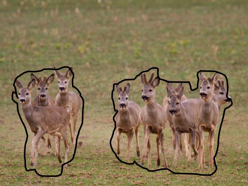 Ballung Eine Anzahl gleicher oder ähnlicher Bildelemente mit geringem Abstand und teilweiser Überdeckung ist in einem Teil der Bildfläche konzentriert dargestellt.