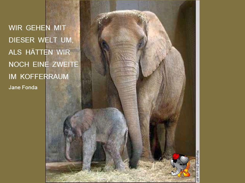 ES KANN NICHT ALLES RICHTIG SEIN IN DER WELT, WEIL DIE MENSCHEN NOCH MIT BETRÜGEREIEN REGIERT WERDEN MÜSSEN Georg Christoph Lichtenberg