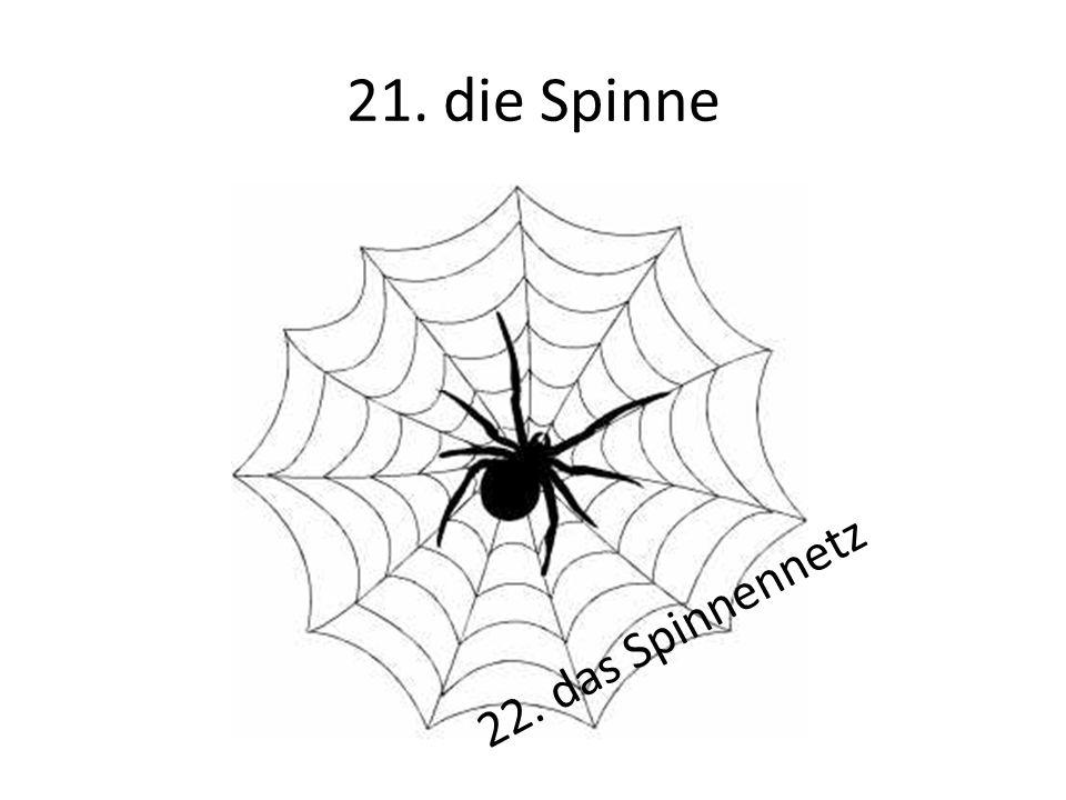 21. die Spinne 22. das Spinnennetz