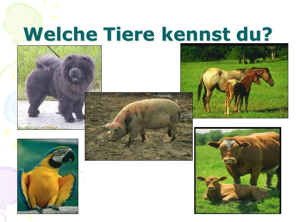 Welche Tiere kennst du?