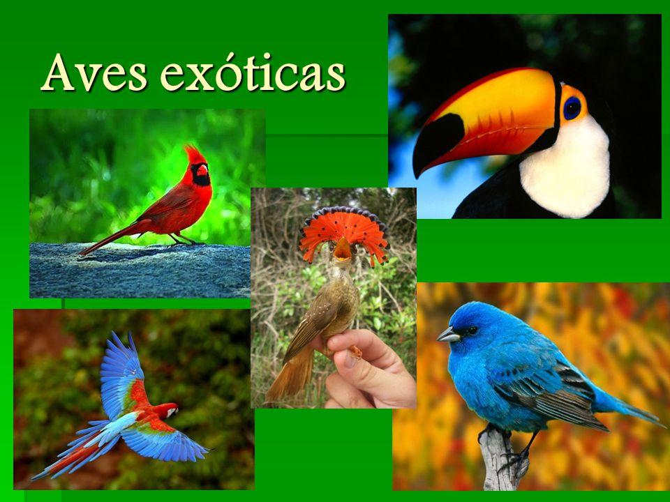 Gemeinsamkeiten  erzwingen eine Veränderung (teilweise unbewusst)  exotische Vögel  Metapher  außergewöhnlich  Heimatlosigkeit  ziehen immer weiter  sind rastlos  nicht immer eine eigene Identität