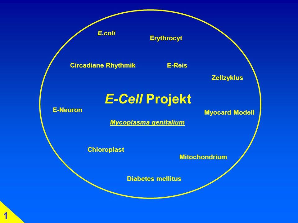 E-Cell Projekt E.coli Erythrocyt E-Reis E-Neuron Chloroplast Mitochondrium Circadiane Rhythmik Diabetes mellitus Myocard Modell Zellzyklus 1 Mycoplasma genitalium