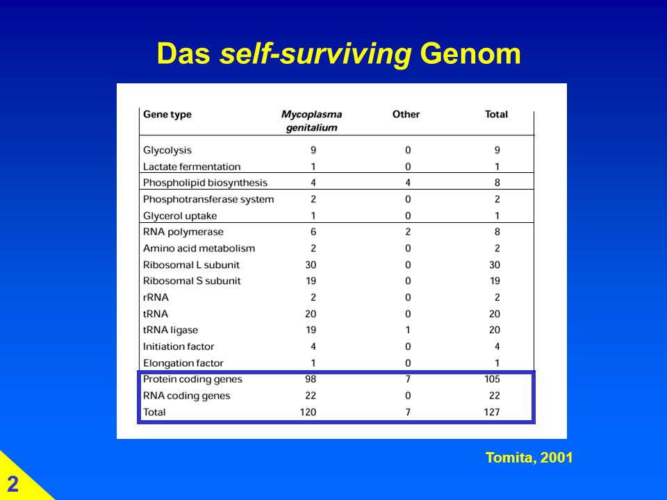 Das self-surviving Genom Tomita, 2001 2
