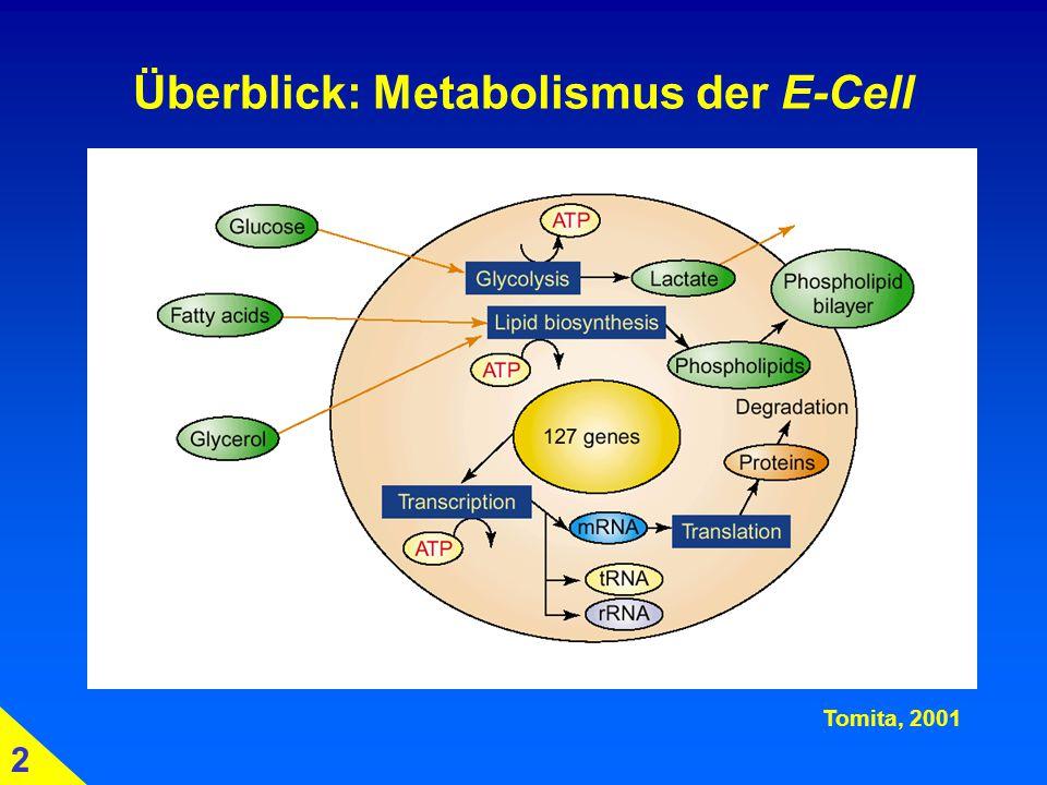 Überblick: Metabolismus der E-Cell Tomita, 2001 2
