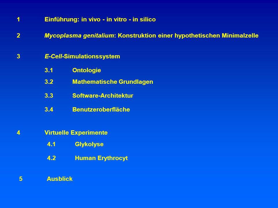 2Mycoplasma genitalium: Konstruktion einer hypothetischen Minimalzelle 1Einführung: in vivo - in vitro - in silico 3E-Cell-Simulationssystem 3.1Ontologie 3.3Software-Architektur 3.4Benutzeroberfläche 4Virtuelle Experimente 4.1Glykolyse 4.2Human Erythrocyt 5Ausblick 3.2 Mathematische Grundlagen