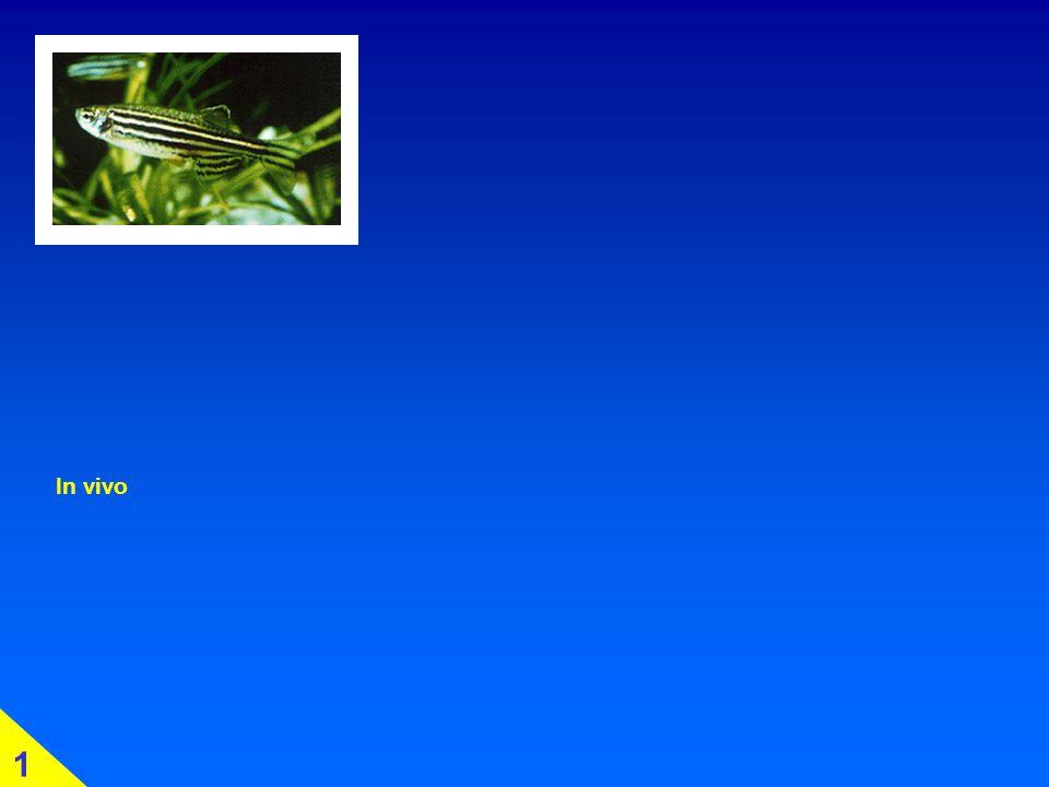 Glykolyse: im Detail 2 energieliefernde Schritte 4.1 Enol- bzw. Pyruvat