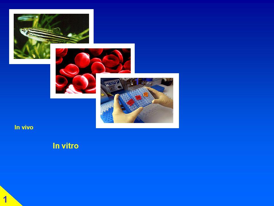 In vivo In vitro In silico 1
