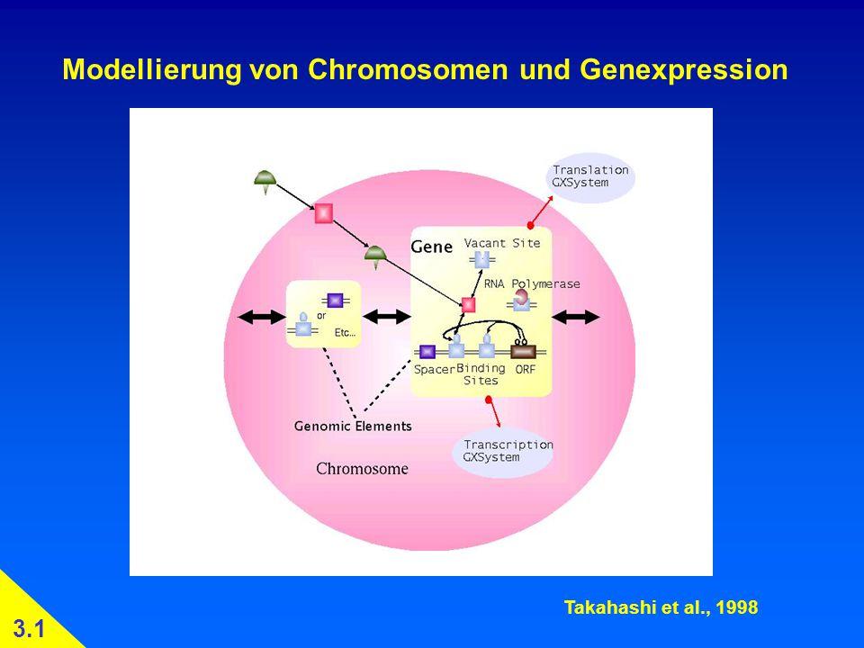 Modellierung von Chromosomen und Genexpression Takahashi et al., 1998 3.1