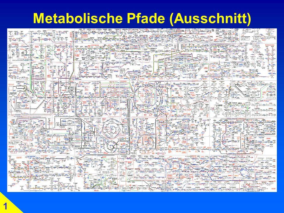 Metabolische Pfade (Ausschnitt) 1