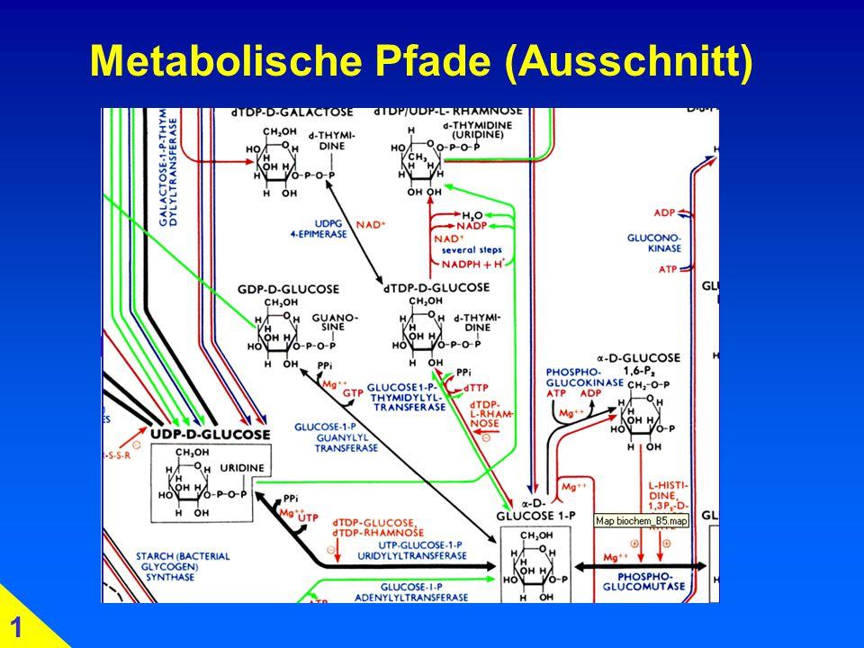 Glykolyse: Simulation Zeit ATP ? 4. 4.1 Glc-Entzug