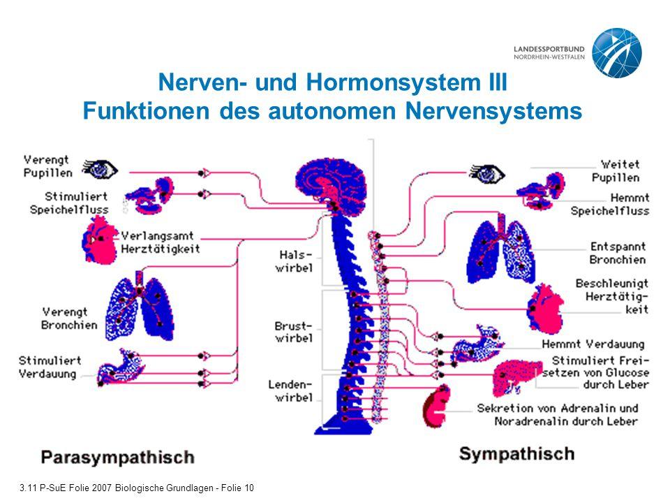 Nerven- und Hormonsystem III Funktionen des autonomen Nervensystems 3.11 P-SuE Folie 2007 Biologische Grundlagen - Folie 10