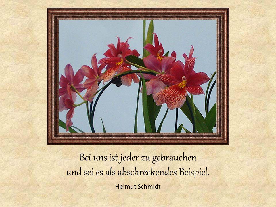 Bei uns ist jeder zu gebrauchen und sei es als abschreckendes Beispiel. Helmut Schmidt