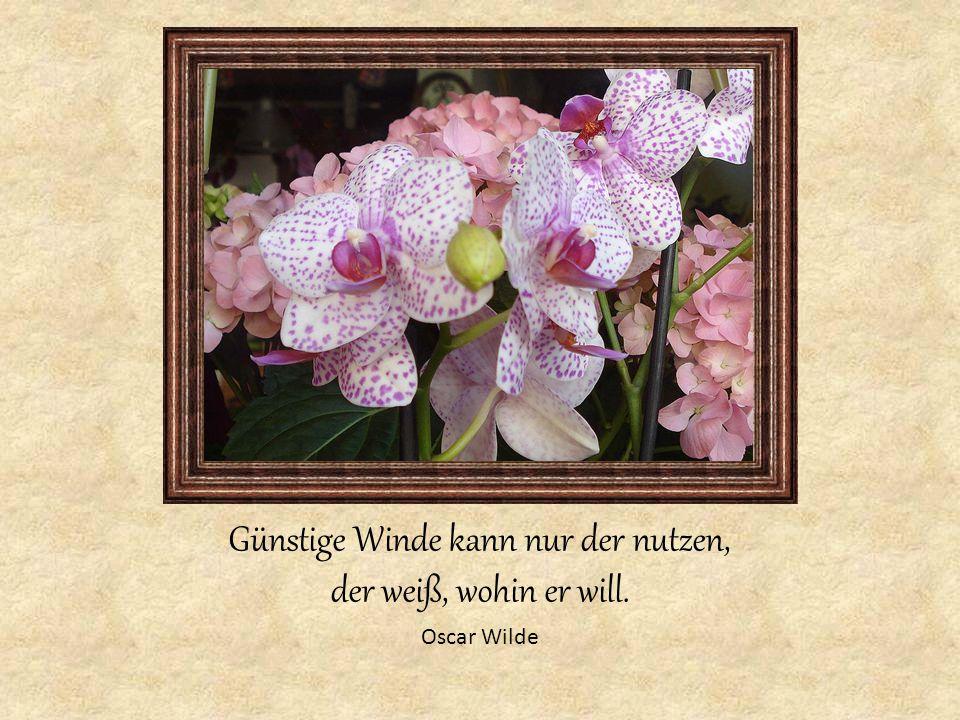 Günstige Winde kann nur der nutzen, der weiß, wohin er will. Oscar Wilde