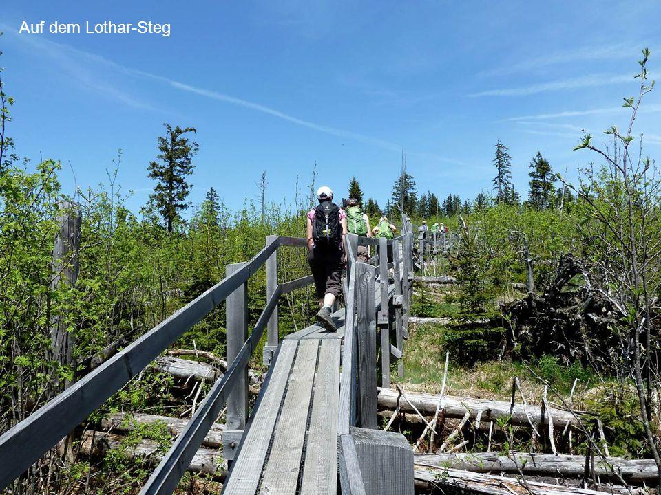 Auf dem Lothar-Steg