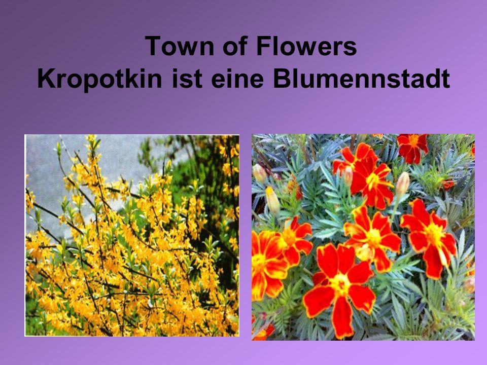 Town of Flowers Kropotkin ist eine Blumennstadt