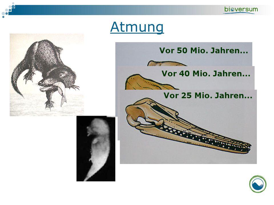 Atmung Vor 50 Mio. Jahren... Vor 40 Mio. Jahren... Vor 25 Mio. Jahren...