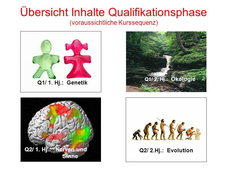 Übersicht Inhalte Qualifikationsphase (voraussichtliche Kurssequenz) Q2/ 1. Hj.: Nerven und Sinne Q1/ 1. Hj.: Genetik Q1/ 2. Hj.: Ökologie Q2/ 2.Hj.: