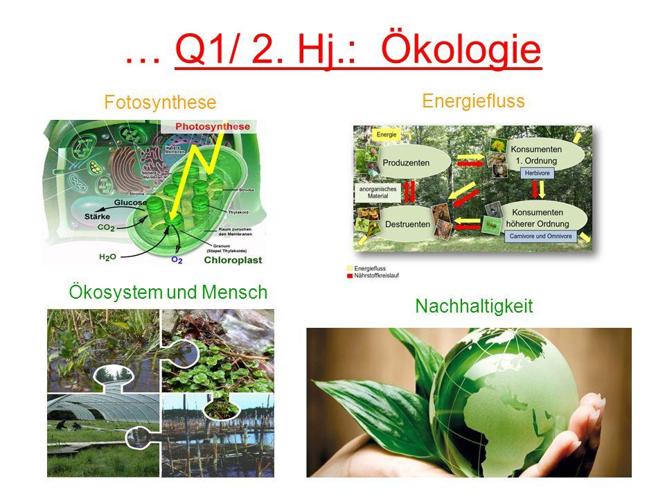 … Q1/ 2. Hj.: Ökologie Ökosystem und Mensch Fotosynthese Energiefluss Nachhaltigkeit