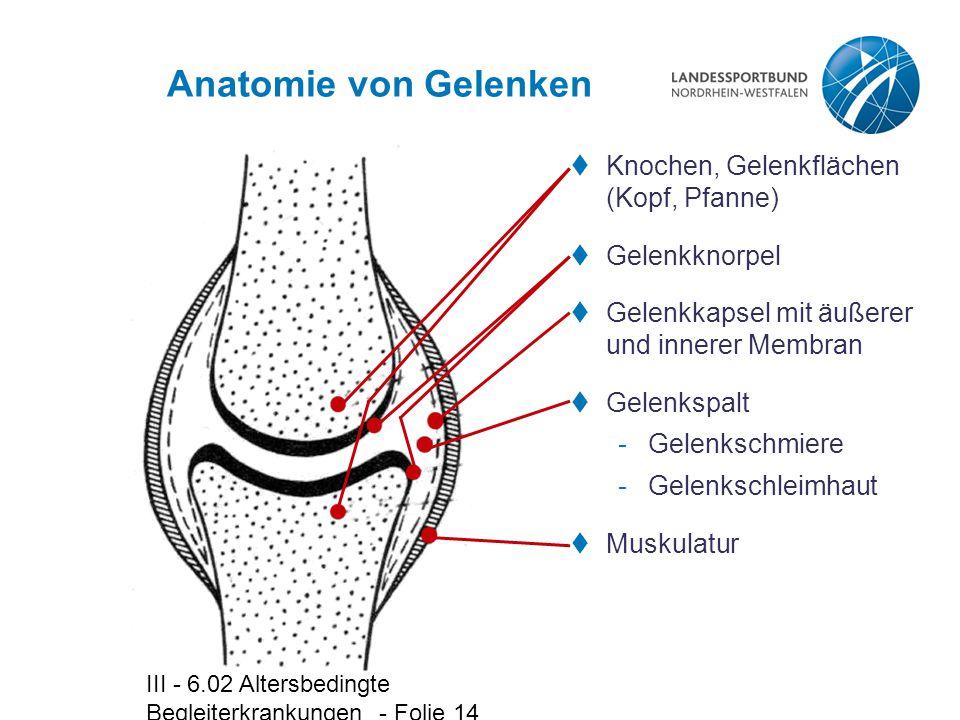 III - 6.02 Altersbedingte Begleiterkrankungen - Folie 14 Anatomie von Gelenken  Knochen, Gelenkflächen (Kopf, Pfanne)  Gelenkknorpel  Gelenkkapsel