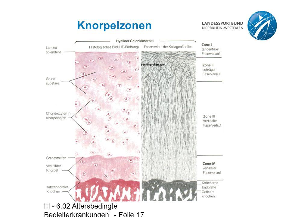 III - 6.02 Altersbedingte Begleiterkrankungen - Folie 17 Knorpelzonen