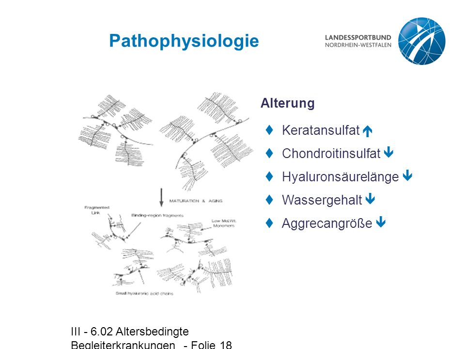 III - 6.02 Altersbedingte Begleiterkrankungen - Folie 18 Pathophysiologie  Keratansulfat   Chondroitinsulfat   Hyaluronsäurelänge   Wassergehal