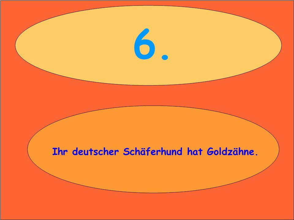 6. Ihr deutscher Schäferhund hat Goldzähne.