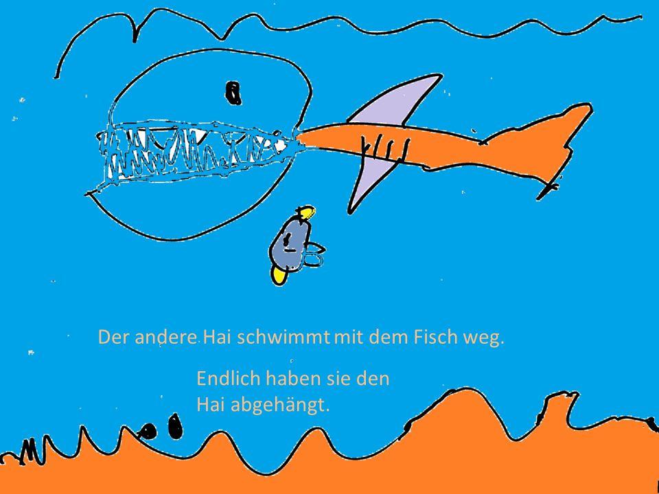 Und dann kommt der andere Hai in den großen Fischschwarm rein und futtert ein paar Fische.