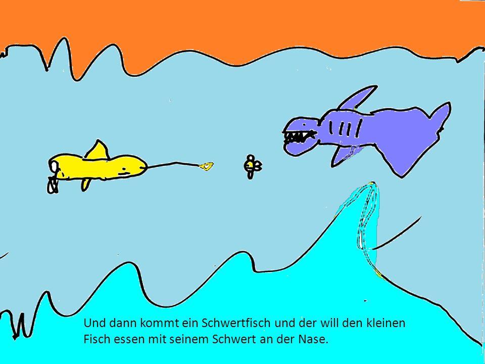 Dann schwimmen sie weiter und sehen einen Thunfischschwarm.