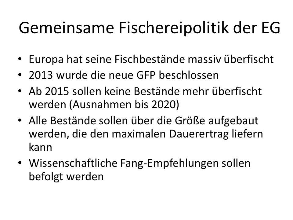 Gemeinsame Fischereipolitik der EG Europa hat seine Fischbestände massiv überfischt 2013 wurde die neue GFP beschlossen Ab 2015 sollen keine Bestände