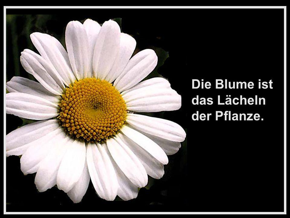 Blumen sind das Lächeln der Natur. Es geht auch ohne sie, aber nicht so gut.