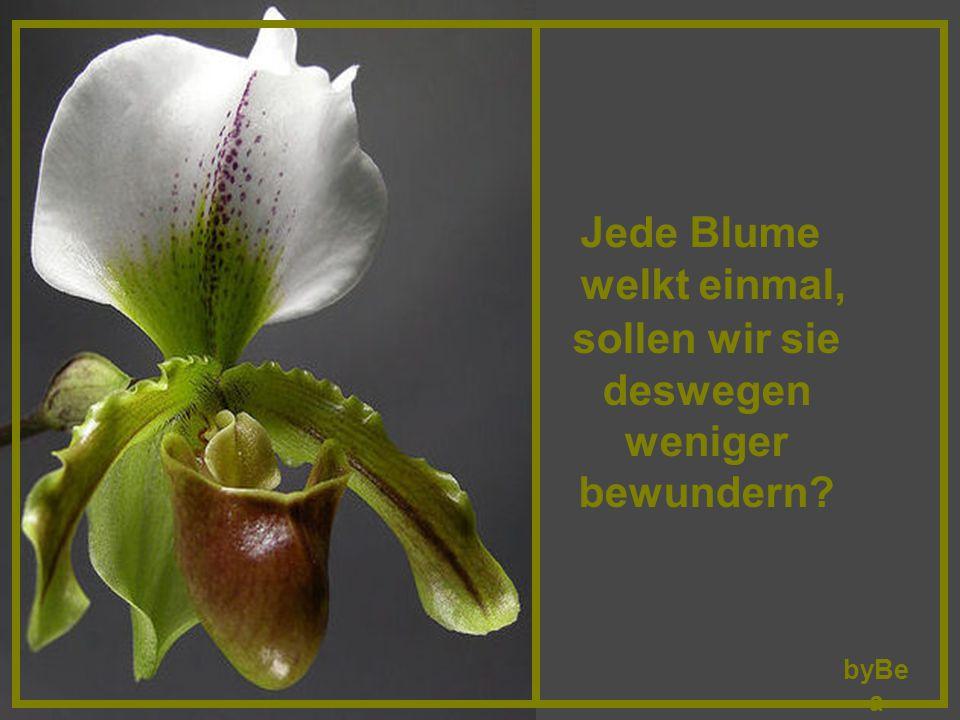 Wie der Geist in den Blumen ist, so ist er auch in den Bäumen.