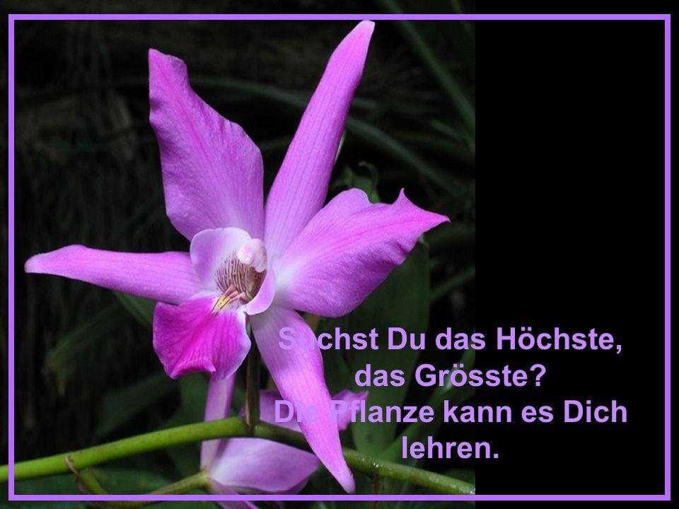 Blüht eine Blume, zeigt sie uns die Schönheit. Blüht sie nicht, lehrt sie uns die Hoffnung...