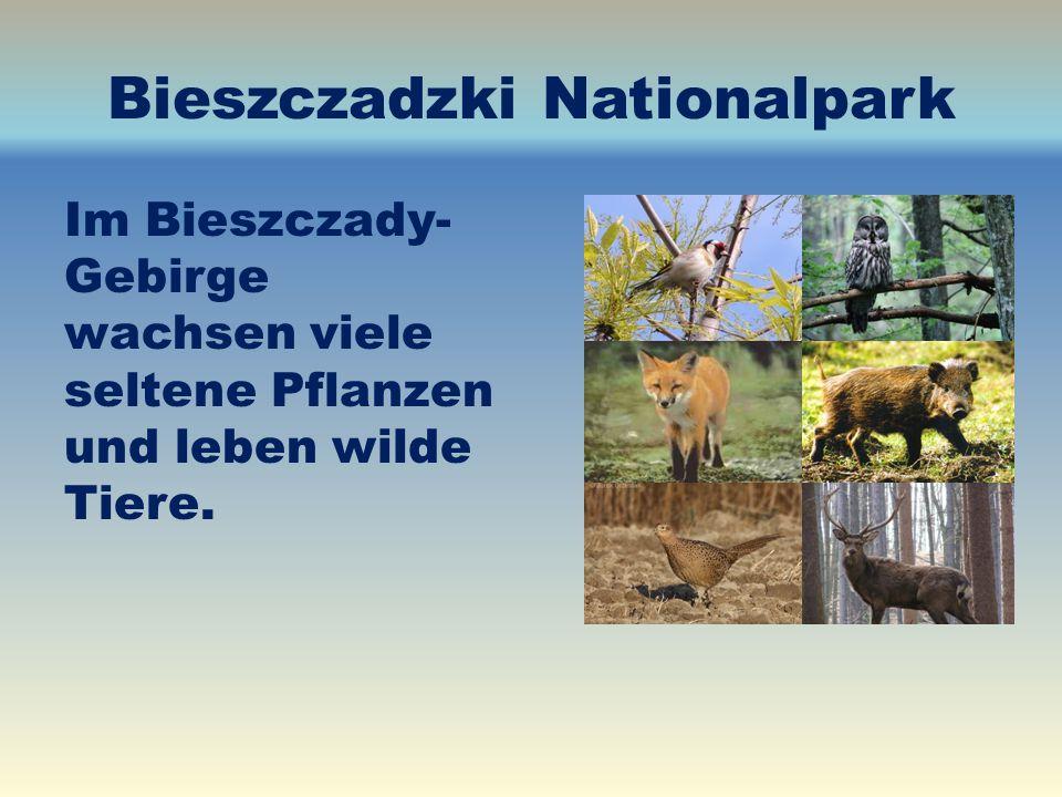 Bieszczadzki Nationalpark Im Bieszczady- Gebirge wachsen viele seltene Pflanzen und leben wilde Tiere.