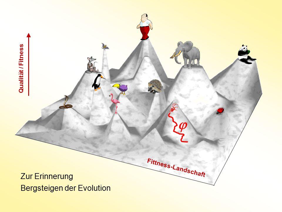 Zur Erinnerung Bergsteigen der Evolution Qualität / Fitness  Fittness-Landschaft