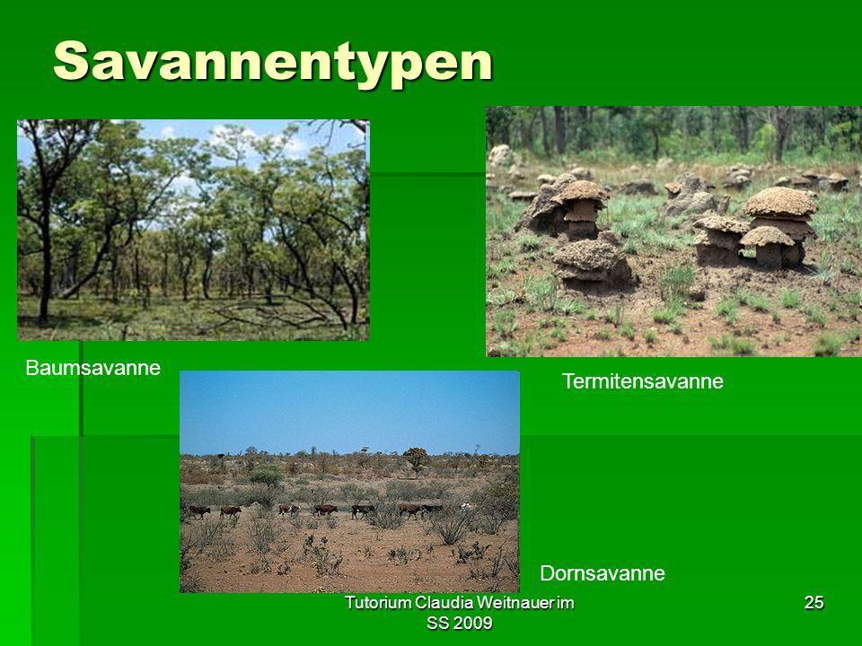 Tutorium Claudia Weitnauer im SS 2009 25 Savannentypen Baumsavanne Termitensavanne Dornsavanne