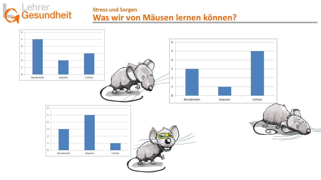 Stress und Sorgen Was wir von Mäusen lernen können?