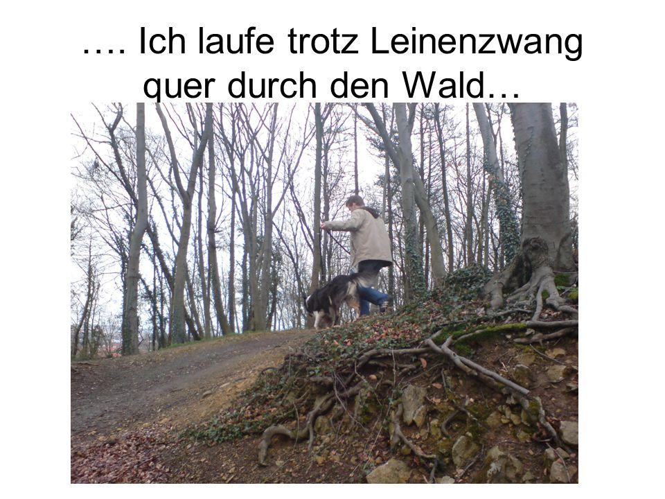 …. Ich laufe trotz Leinenzwang quer durch den Wald…