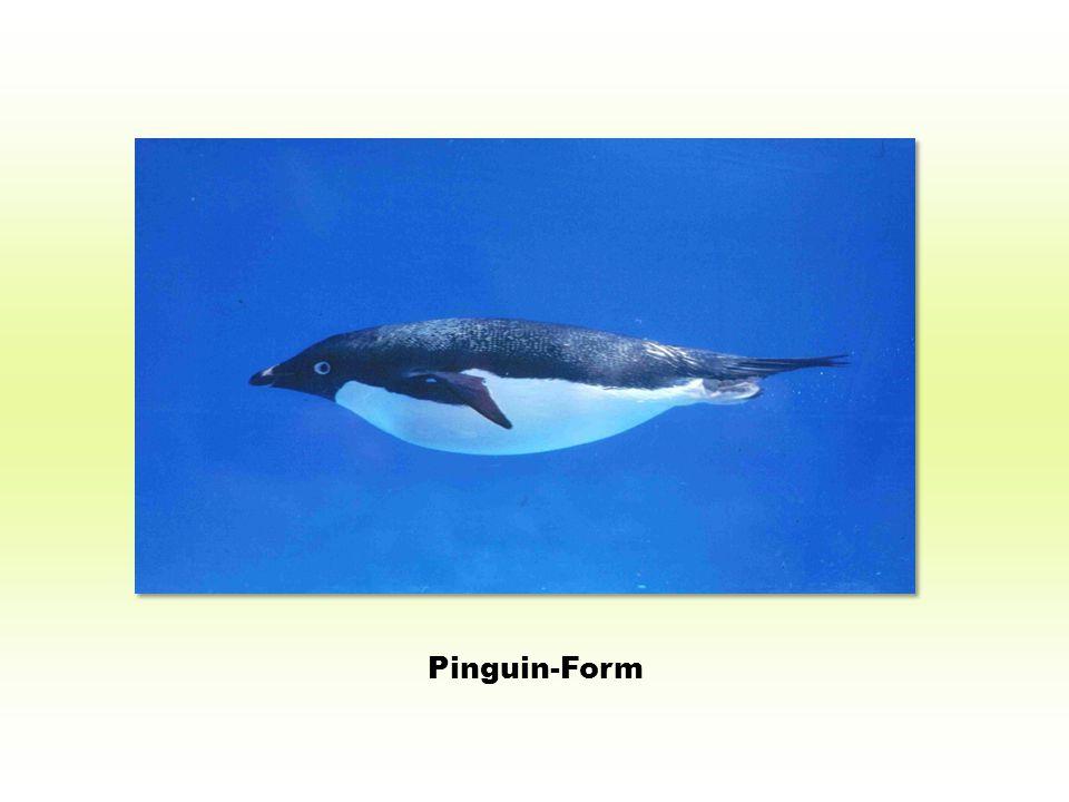 Pinguin-Form