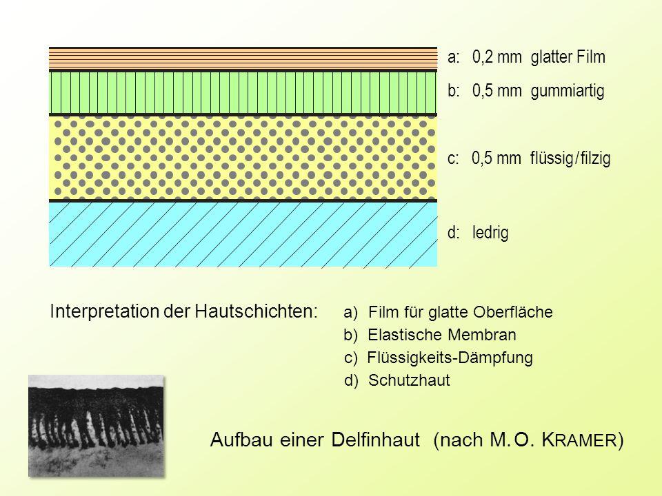 a: 0,2 mm glatter Film b: 0,5 mm gummiartig c: 0,5 mm f lüssig / filzig d: ledrig Aufbau einer Delfinhaut (nach M.