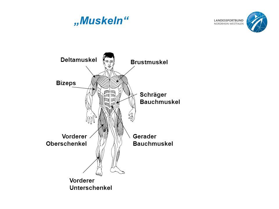 """""""Muskeln"""" Deltamuskel Brustmuskel Bizeps Vorderer Oberschenkel Schräger Bauchmuskel Gerader Bauchmuskel Vorderer Unterschenkel"""