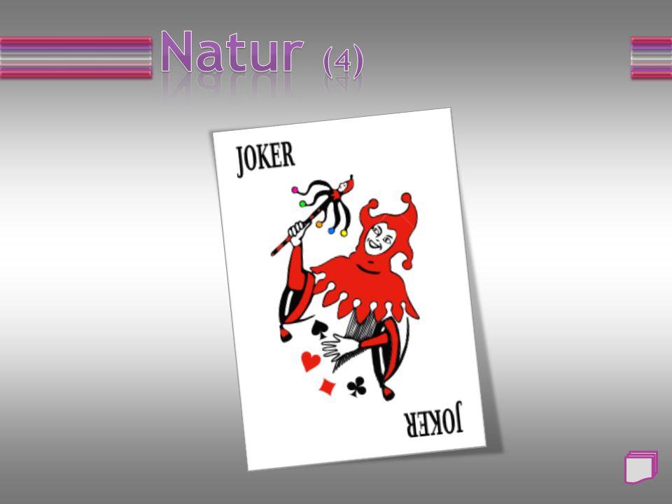 Frage: Wie nennt man den Schwanz des Hasen? a) Blume b) Blatt c) Knolle d) Beere