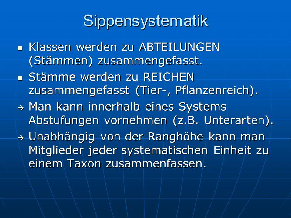 Sippensystematik Klassen werden zu ABTEILUNGEN (Stämmen) zusammengefasst. Klassen werden zu ABTEILUNGEN (Stämmen) zusammengefasst. Stämme werden zu RE