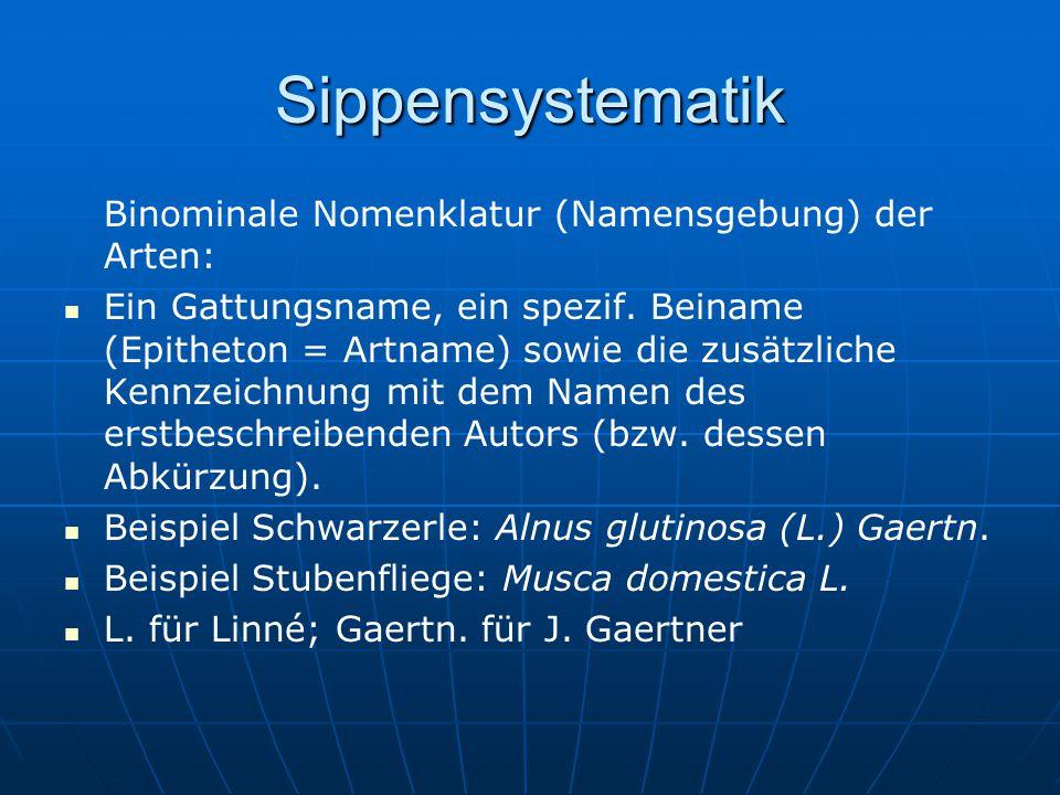 Sippensystematik Binominale Nomenklatur (Namensgebung) der Arten: Ein Gattungsname, ein spezif. Beiname (Epitheton = Artname) sowie die zusätzliche Ke