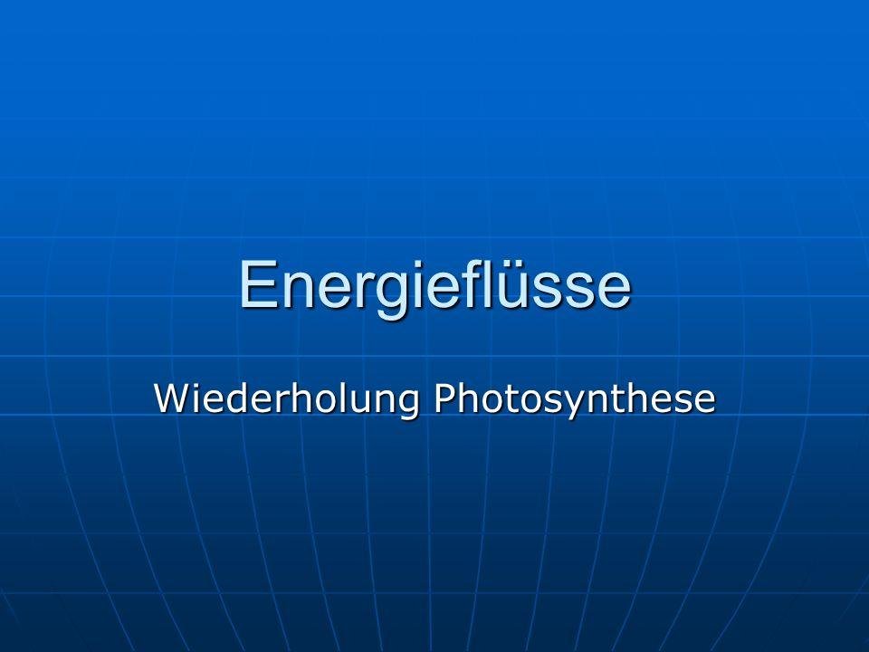 Energieflüsse Wiederholung Photosynthese