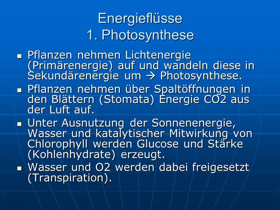 Energieflüsse 1. Photosynthese Pflanzen nehmen Lichtenergie (Primärenergie) auf und wandeln diese in Sekundärenergie um  Photosynthese. Pflanzen nehm