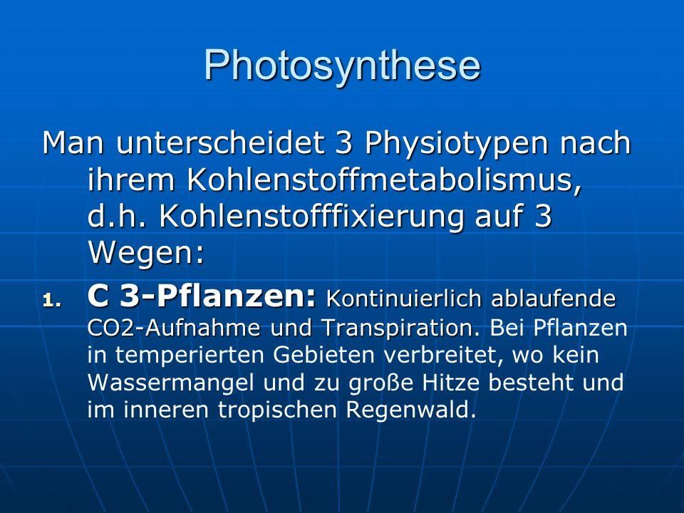 Photosynthese Man unterscheidet 3 Physiotypen nach ihrem Kohlenstoffmetabolismus, d.h. Kohlenstofffixierung auf 3 Wegen: 1. C 3-Pflanzen: Kontinuierli