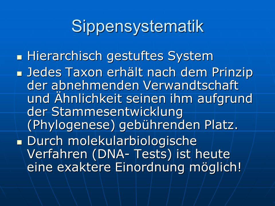 Sippensystematik Das System gliedert sich in verschiedene Ordnungsebenen (Kategorien).